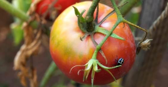 fertilizantes e pesticidas orgânicos