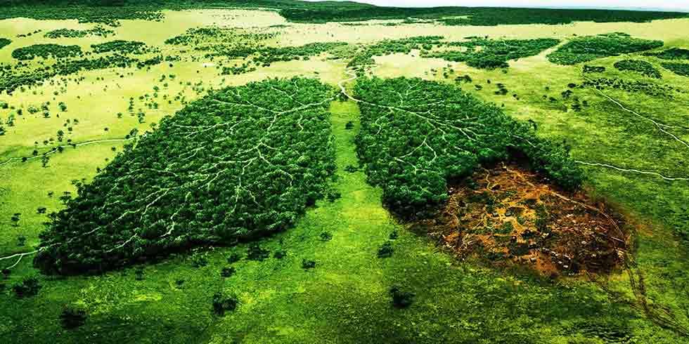 Brasil é o pulmão do mundo