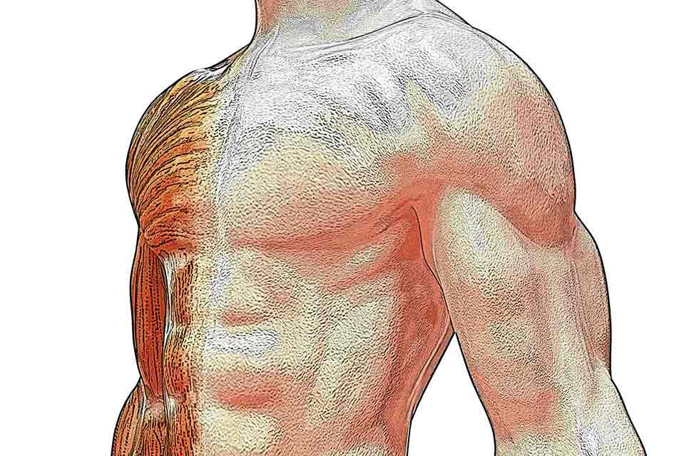 Corpo humano sintético