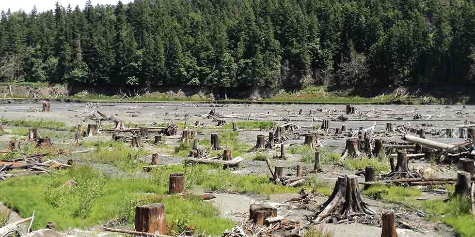 Desmatamento e Degradação Florestal zero até 2020