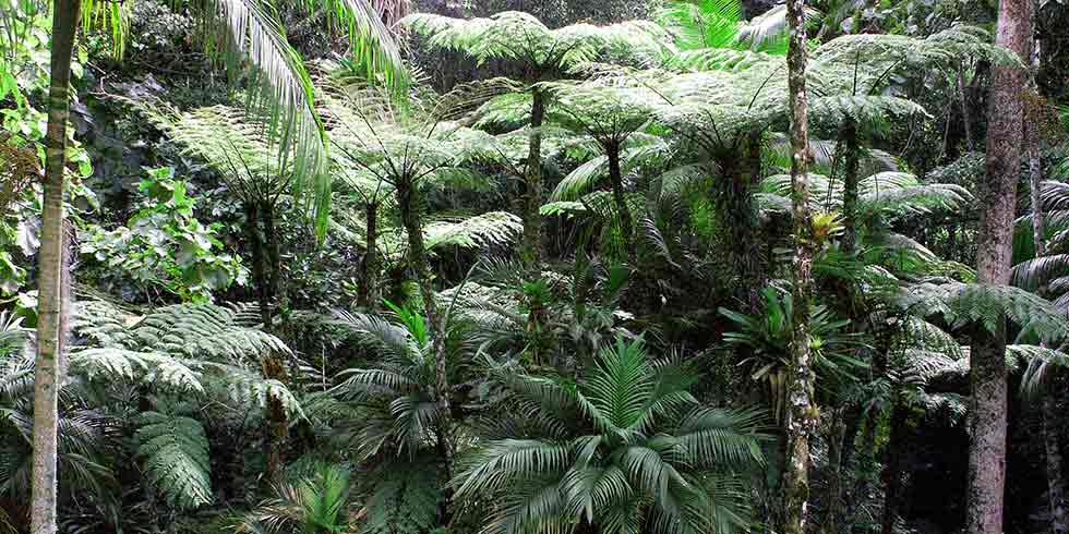 Floresta do estado do Amapá em risco