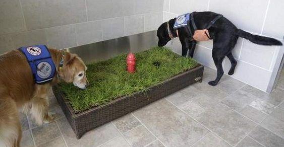 Toilette para cães