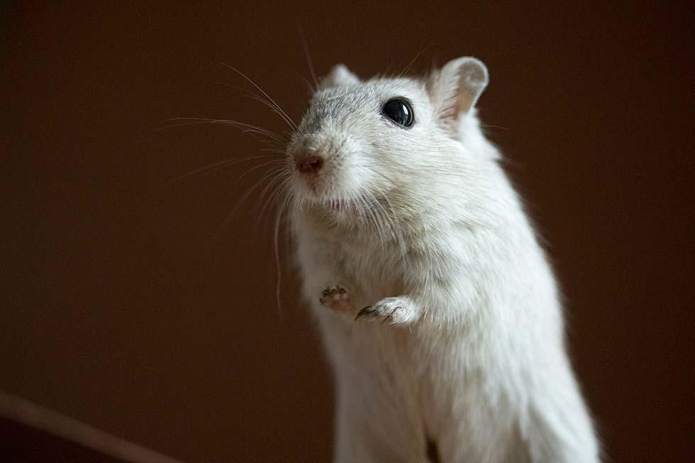 banimento de testes em animais no Brasil