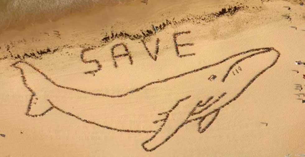 Japão deverá interromper caça às baleias