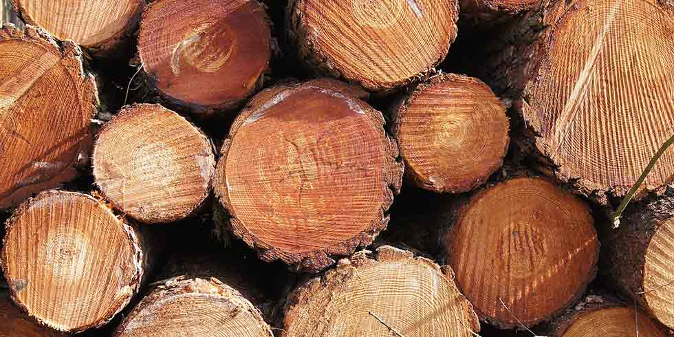 Greenpeace lança campanha contra madeira ilegal