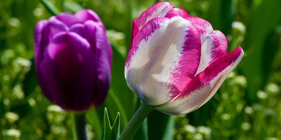 Aprendendo com as plantas a equilibrar-se física, energética e espiritualmente