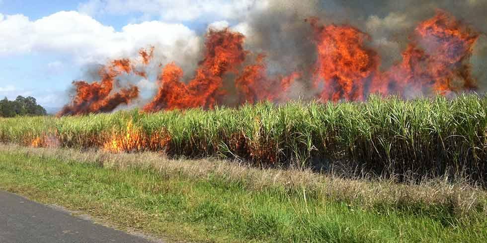 USP busca manejo mais sustentável para a cana de açúcar