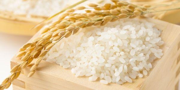arroz japonês sanishiki