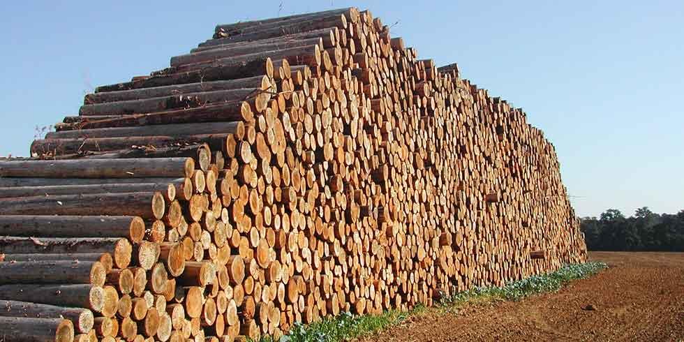 tratamento especial faze madeira super-resistente