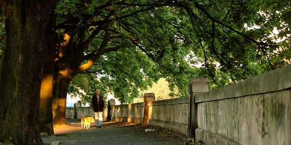 a árvore ideal para sua calçada
