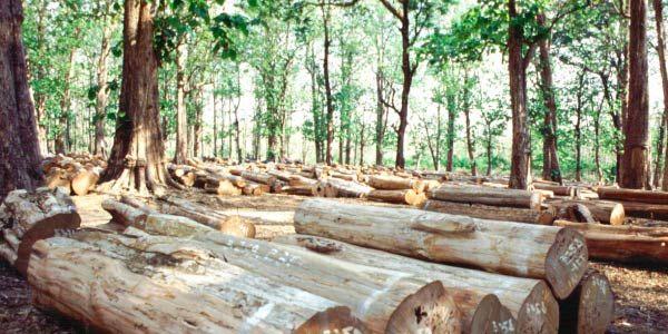 Desmatamento da Amazônia cresceu quase 3 vezes