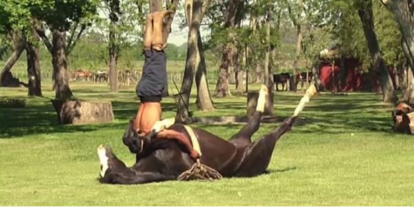 Domar cavalos de uma forma não violenta fazendo yoga
