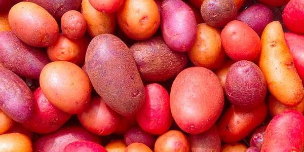 melhor tipo de batata para cada receita