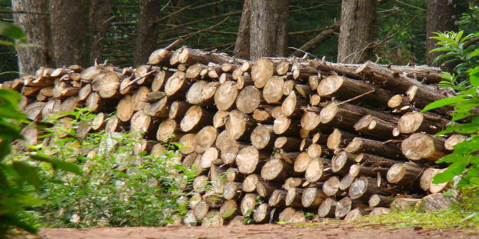 Dados provisórios revelam recorde de desmatamento amazônico