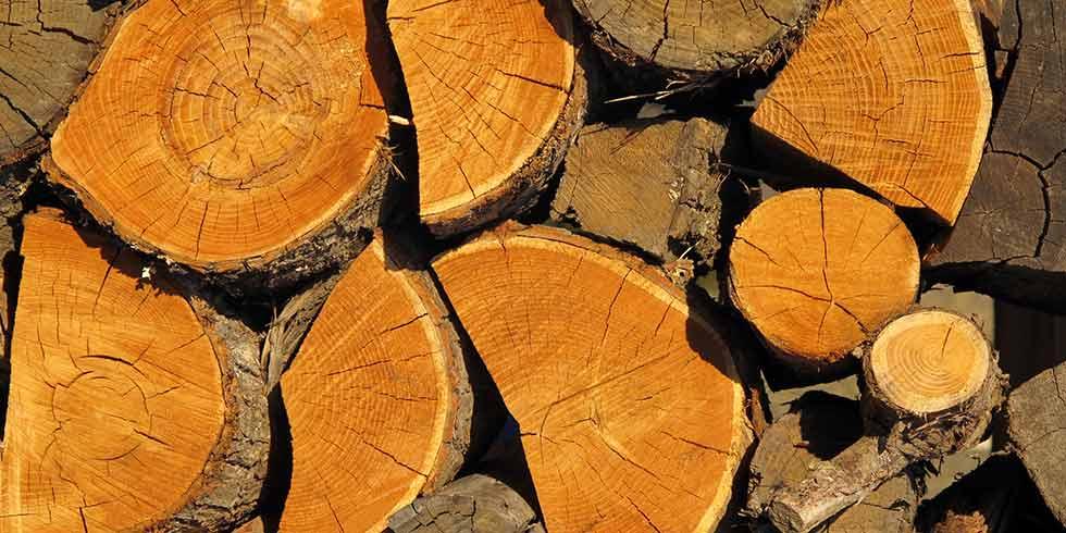 Brasil passa a aderir ao Acordo Internacional de Madeiras Tropicais