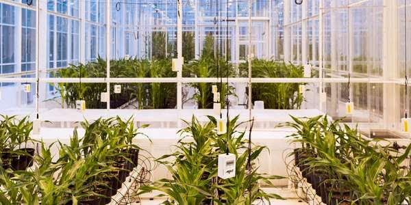 Mudança climática: quais plantas sobreviverão