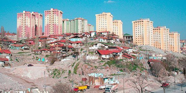 a urbanização afeta a biodiversidade