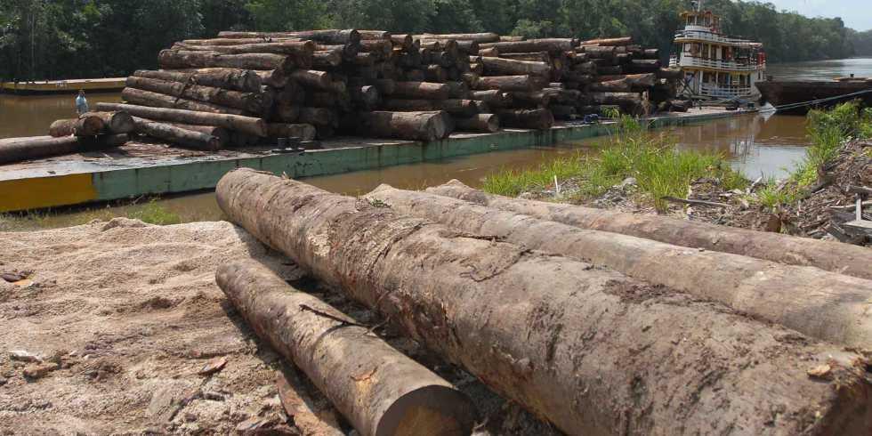Greenpeace denuncia madeira brasileira na Europa