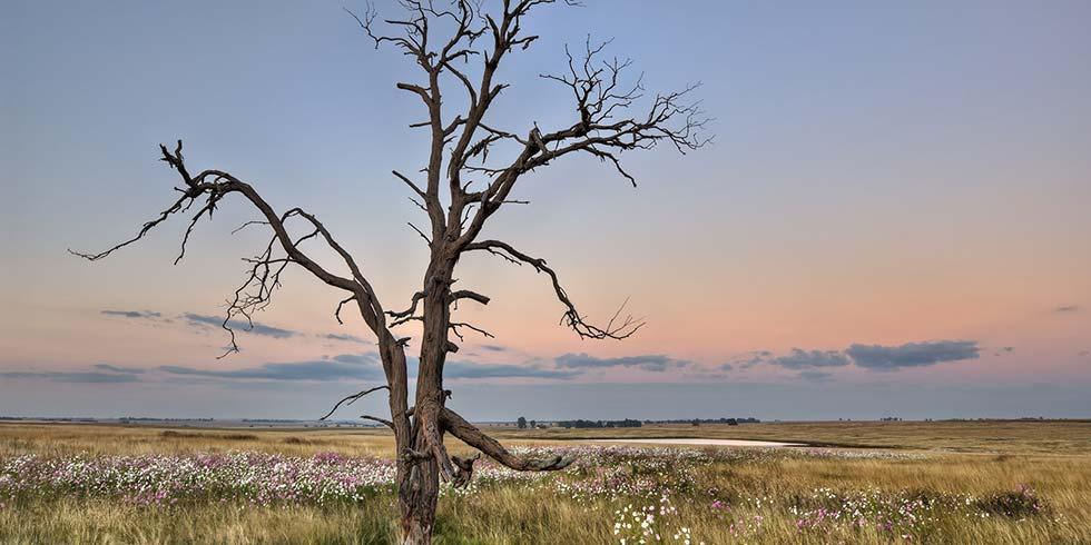 Carbono importância vital para a conservação da vida sobre a Terra