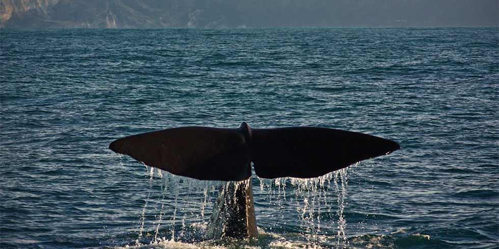 Baleias: seus hábitos respiratórios