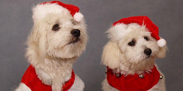 Feliz Natal para pets abandonados em São Paulo