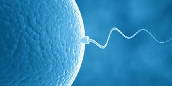 Quando óvulo e espermatozoide se encontram…fogos de artifício