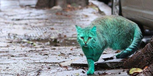 mistério do gato verde de Varna, Bulgária