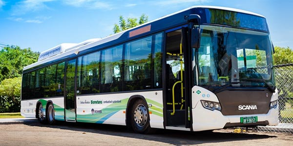 Ônibus podem ser movidos a fezes de aves