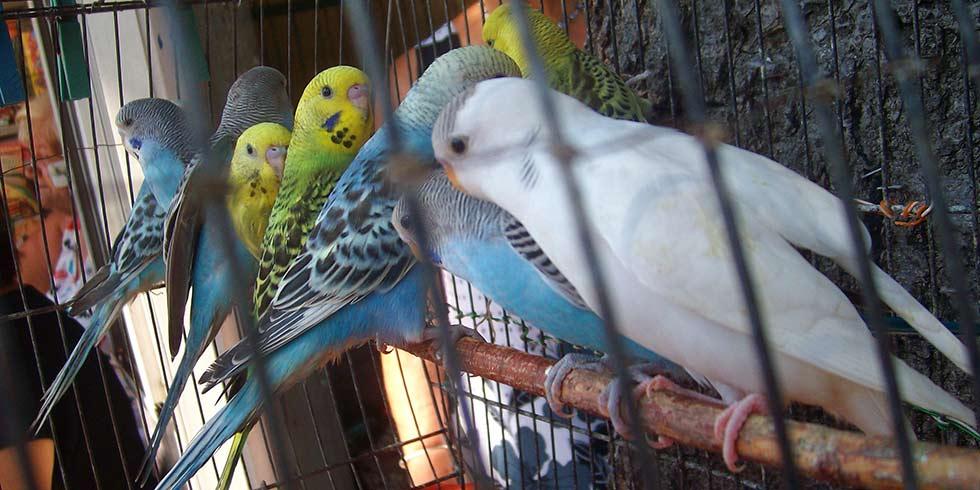 proibido expor animais em vitrines e gaiolas