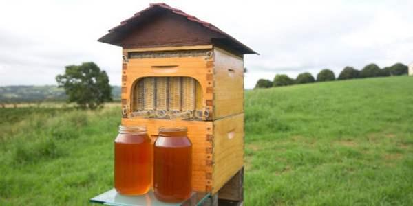 colmeia que recolhe mel sem perturbar as abelhas