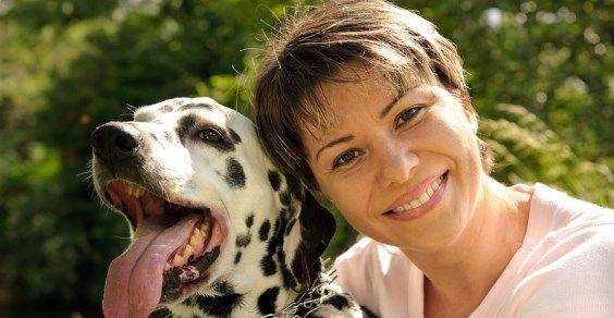 cães sabem reconhecer a felicidade e a raiva dos rostos humanos