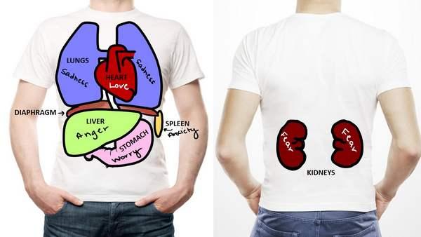 correspondência órgãos e emoções