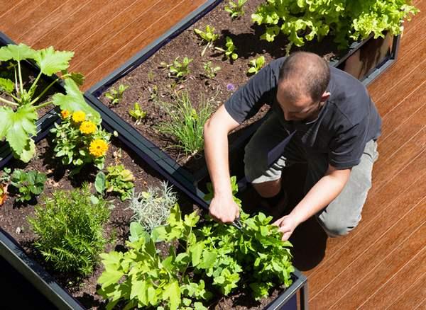 Plantando no horto autoirrigante