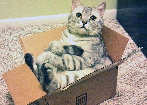 Gatinho na caixa