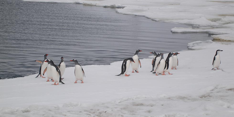 Gelo da Antártica tem redução de quase 20%