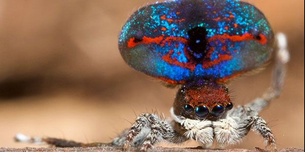 Descobertas mais duas aranhas