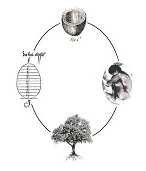 Capsula Mundi ciclo da vida