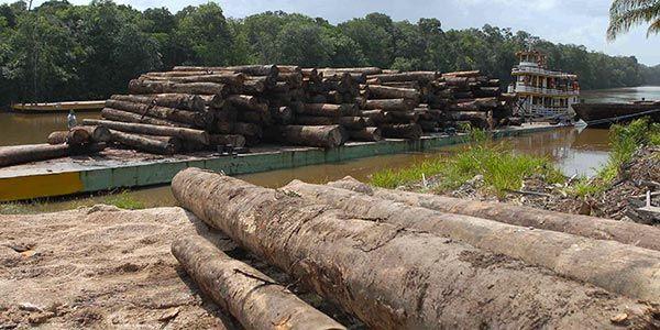 Força Nacional de Segurança irá combater o desmatamento
