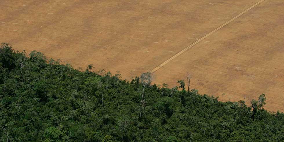Desmatamento aumenta na Amazônia Legal