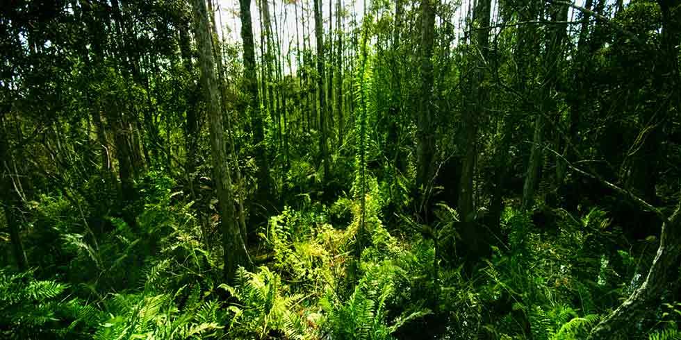 primeiros ancestrais humanos viveram nas florestas tropicais