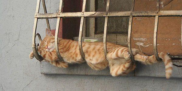 Quanto e como os gatos dormem