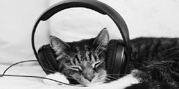 Música apenas para gatos