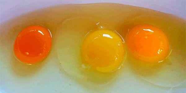 Como reconhecer a origem do ovo pela sua cor