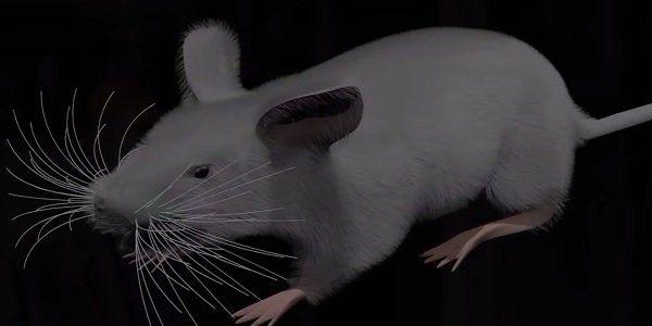 rato virtual para por fim aos testes em animais
