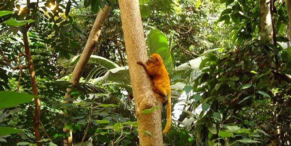Imazon calcula tempo que governo precisará para legalizar terras da Amazônia