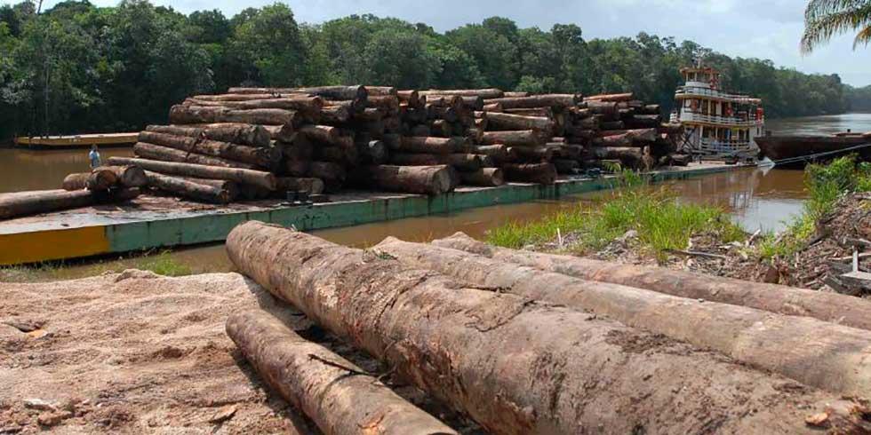 florestas brasileira