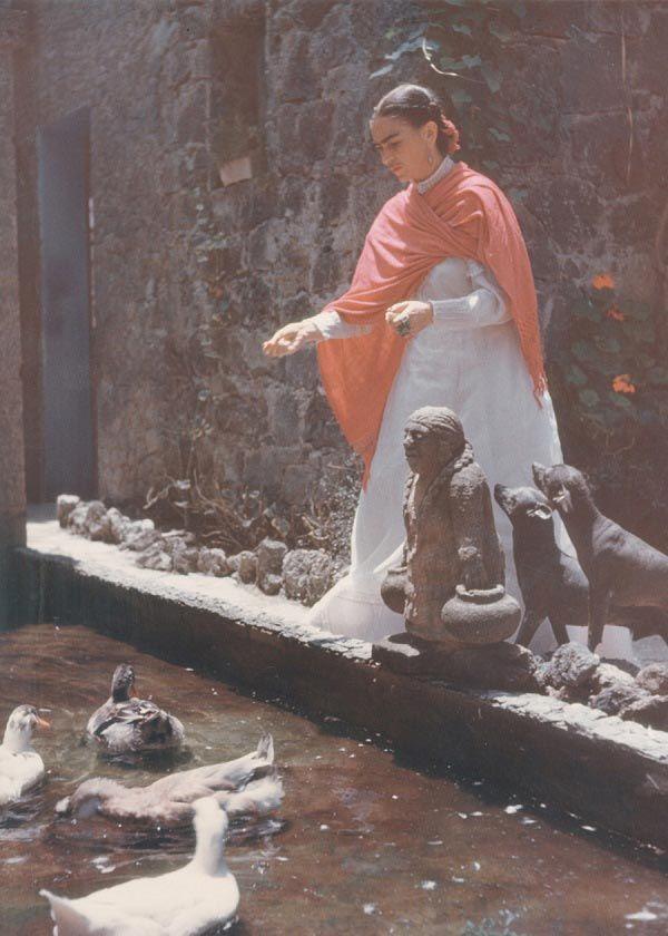 Frida alimenta patos