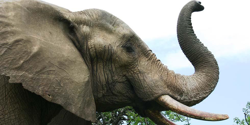 elefantes Tailândia