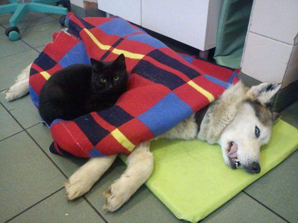 Radamenes cuida de um cachorro