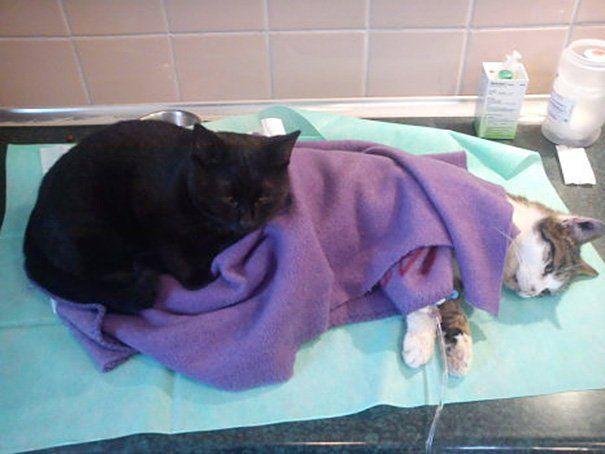 Radamenes cuida de um gato